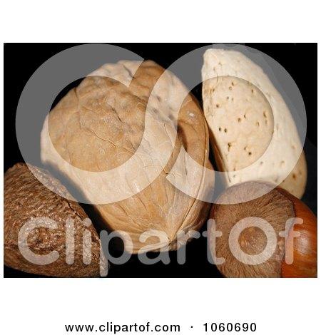 Brazil Nut, Walnut, Almond, and a Hazelnut - Royalty Free Stock Photo by Kenny G Adams