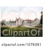 Cows Grazing At Penshurst Place In Tunbridge Wells England Royalty Free Stock Photography