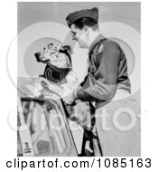 Dog Wearing Goggles Boarding A Plane Royalty Free Stock Photography
