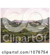 Grapevine Winery Hills In San Paolo St PaulS Eppan Tyrol Austria Royalty Free Stock Photography