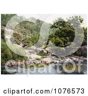 Historical Cattle At The River Wye In Millers Dale Derbyshire England Royalty Free Stock Photography