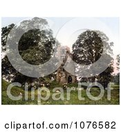 Historical Cattle Grazing In Front Of The Ruins Of Kirkoswald Castle Kirkoswald Cumbria England Royalty Free Stock Photography