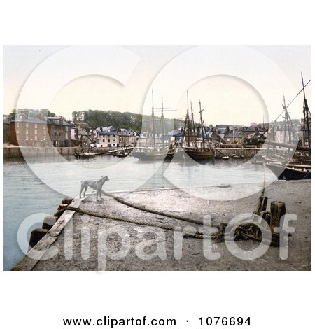 Historical Dog at the Padstow Quay, Cornwall, England, United Kingdom - Royalty Free Stock Photography  by JVPD