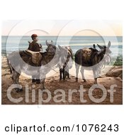 Historical Little Boy By Saddled Donkeys Waiting For A Job And Standing On A Beach In England Royalty Free Stock Photography