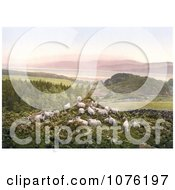 Historical Sheep Grazing In A Hilly Pasture Near A Lake In England Royalty Free Stock Photography