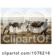 Historical Two Boys Trying To Budge A Stubborn Donkey On A Beach In England Royalty Free Stock Photography