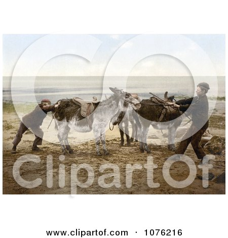 Historical Two Boys Trying to Budge a Stubborn Donkey on a Beach in England - Royalty Free Stock Photography  by JVPD
