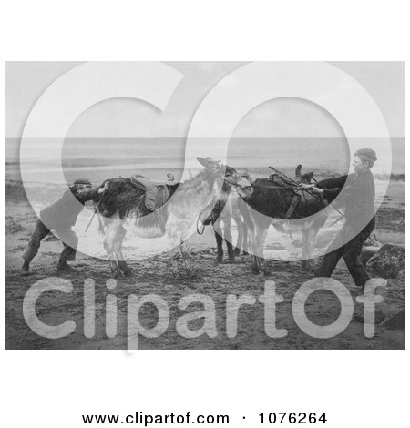 Historical Two Boys Trying to Get a Stubborn Donkey to Move on a Beach, England - Royalty Free Stock Photography  by JVPD