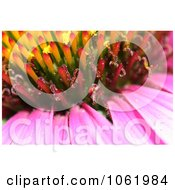 Macro Photo Of Purple Coneflower Royalty Free Flower Stock Photography by Kenny G Adams