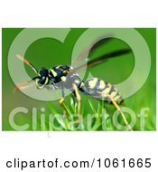 Macro Photo Of Yellow Jacket Wasp On Scotch Moss Royalty Free Stock Photography by Kenny G Adams