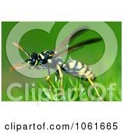 Macro Photo Of Yellow Jacket Wasp On Scotch Moss Royalty Free Stock Photography
