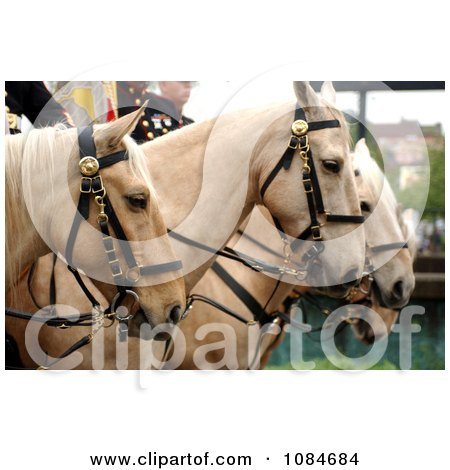 Marine Corps Mounted Color Guard on Palaminos - Free Stock Photography by JVPD
