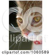 Orange Cat Face Portrait Stock Photo by Kenny G Adams