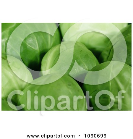 Organic Brussels Sprouts - Royalty Free Vegetable Stock Photo by Kenny G Adams