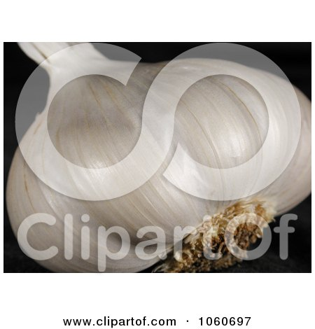 Organic Garlic Bulb Head - Royalty Free Vegetable Stock Photo by Kenny G Adams