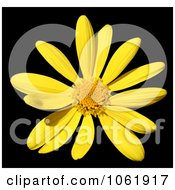 Photo Of Yellow Daisy Royalty Free Flower Stock Photography by Kenny G Adams