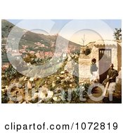 Photochrom Of A Cemetery Algiers Algeria Royalty Free Historical Stock Photography