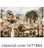 Photochrom Of A Garden In The Ruins Of Carthage Tunisia Royalty Free Historical Stock Photo by JVPD