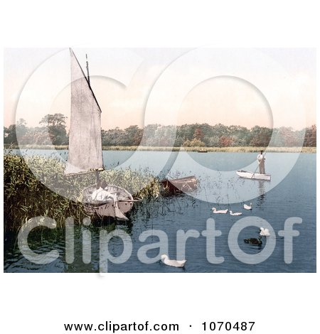 Photochrom of Ducks and Men in Boats on the Trinity Broads Ormesby Norfolk England - Royalty Free Historical Stock Photography by JVPD