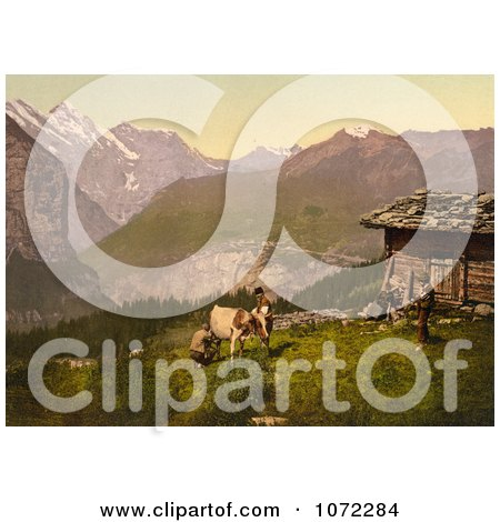 Photochrom of Farmers Milking a Cow in Switzerland - Royalty Free Historical Stock Photography by JVPD
