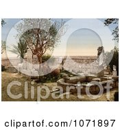 Photochrom Of Fountain In The Garden At Carthage Tunisia In 1899 Royalty Free Historical Stock Photo by JVPD