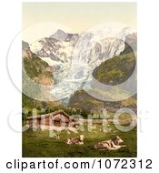 Photochrom Of Livestock And Barn Near Baregg Glacier Switzerland Royalty Free Historical Stock Photography