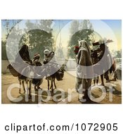 Photochrom Of People With Pack Mules At Bab Aleona Tunis Tunisia Royalty Free Historical Stock Photography by JVPD
