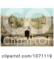Photochrom Of Sheep In Front Of The Damascus Gate Jerusalem Royalty Free Historical Stock Photo by JVPD