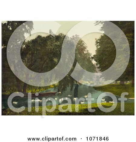 Photochrom of Swans and Pond at Hampton Court Park - Royalty Free Historical Stock Photo by JVPD