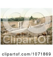 Photochrom Of The Center Stone Of The Temple Of Bacchus Baalbek Royalty Free Historical Stock Photo