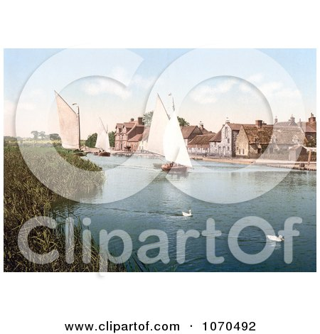 Photochrom of Two White Ducks Near Sailboats at Horning Village in Norfolk England - Royalty Free Historical Stock Photography by JVPD