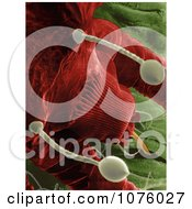 Red Palm Mite Raoiella Indica Royalty Free Stock Photography