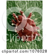 Red Palm Mite Royalty Free Stock Photography