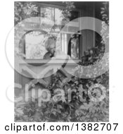 Royalty Free Historical Photo Of Mark Twain Samuel Langhorne Clemens Looking Out A Window Into A Garden 1903 by JVPD