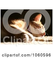 Royalty Free Stock Photo Of Sunbathing Calico Cat by Kenny G Adams