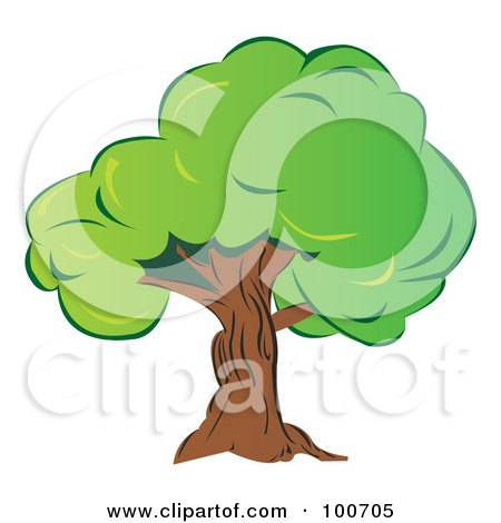 Royalty-Free (RF) Clipart Illustration of a Mature Old Tree With Thick Green Foliage by MilsiArt