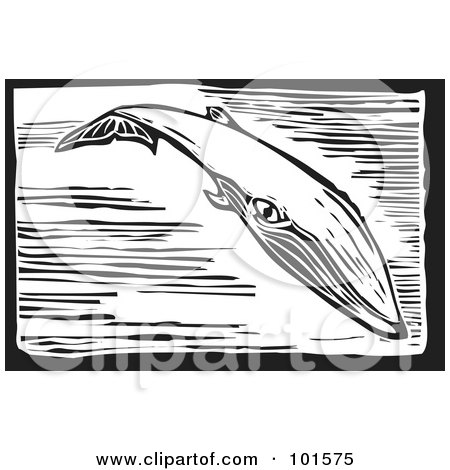 Royalty-Free (RF) Clipart Illustration of a Black And White Engraved Sei Whale (Balaenoptera borealis) by xunantunich