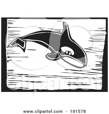 Royalty-Free (RF) Clipart Illustration of a Black And White Engraved Killer Whale (Orcinus orca) by xunantunich