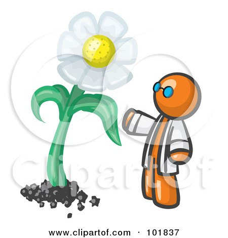 Royalty-Free (RF) Clipart Illustration of an Orange Man Scientist Admiring A Giant White Daisy Flower by Leo Blanchette