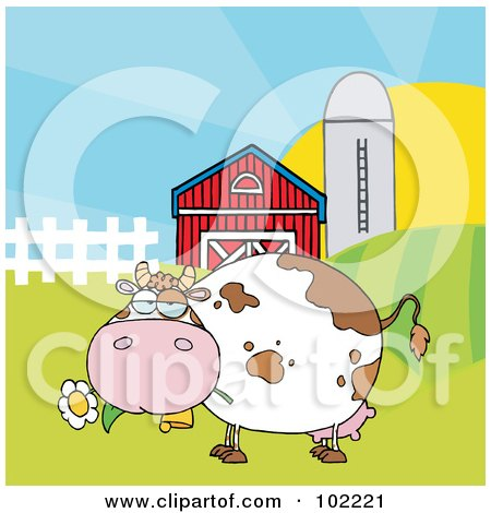 Royalty-Free (RF) Clipart Illustration of a Chubby White Cow Eating A Daisy By A Silo And Barn by Hit Toon
