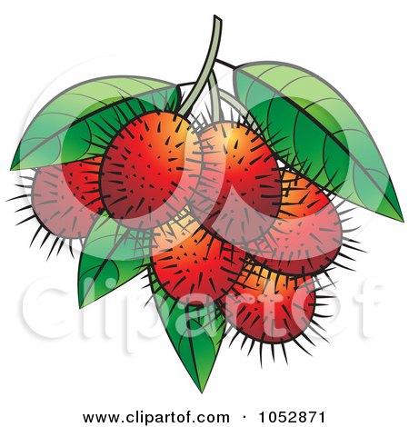 Royalty Free Rf Rambutan Clipart Illustrations Vector