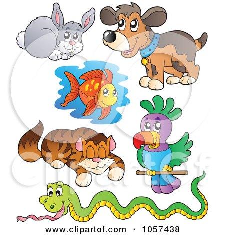 Pets & Animal