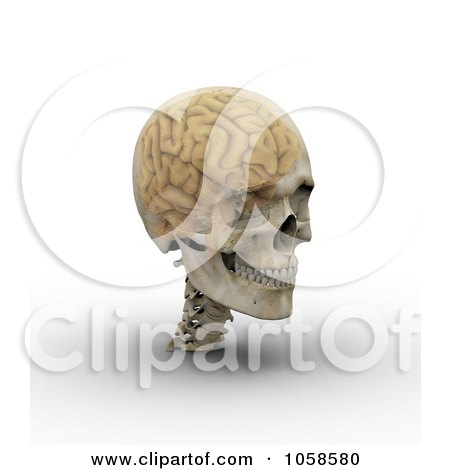 Royalty-Free CGI Clip Art Illustration of a 3d Transparent Skull With The Visible Brain - 3 by Michael Schmeling