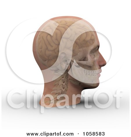 Royalty-Free CGI Clip Art Illustration of a 3d Skull And Brain Showing Through Transparent Skin On A Male Head - 2 by Michael Schmeling