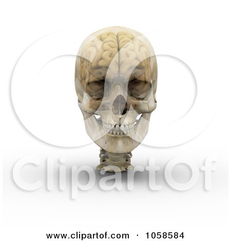 Royalty-Free CGI Clip Art Illustration of a 3d Transparent Skull With The Visible Brain - 1 by Michael Schmeling