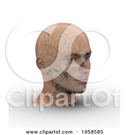 Royalty-Free CGI Clip Art Illustration of a 3d Skull And Brain Showing Through Transparent Skin On A Male Head - 3 by Michael Schmeling