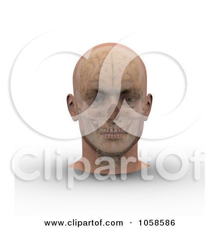 Royalty-Free CGI Clip Art Illustration of a 3d Skull And Brain Showing Through Transparent Skin On A Male Head - 1 by Michael Schmeling