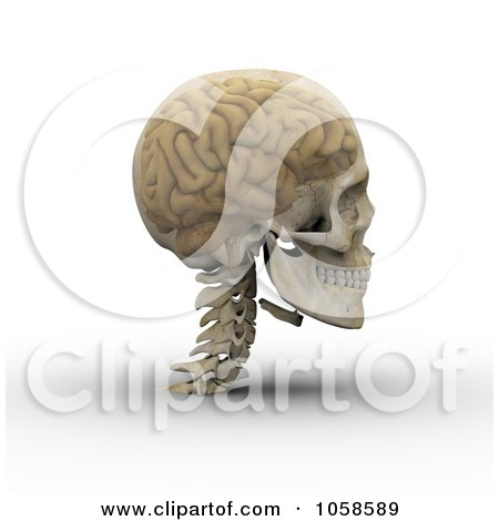 Royalty-Free CGI Clip Art Illustration of a 3d Transparent Skull With The Visible Brain - 2 by Michael Schmeling