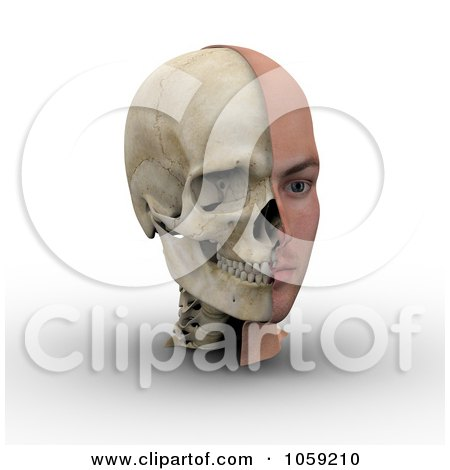 Royalty-Free CGI Clip Art Illustration of a 3d Male Head Showing Half With Flesh, Half With Bone - 2 by Michael Schmeling