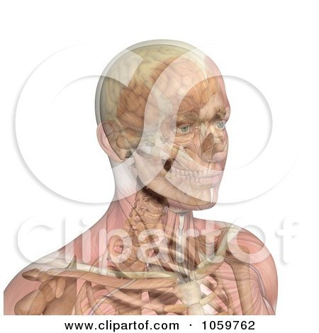 Royalty-Free CGI Clip Art Illustration of a 3d Male Head With Transparent Muscles Showing Bone And Brain by Michael Schmeling
